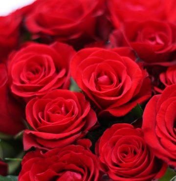 Rosebukett - romantikk på godset