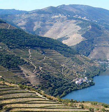 Douro-dalen i Portugal - Portvinskurs på Losby Gods